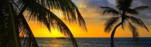 sunset over the ocean with palm trees in the foreground. Part of the home page slide show